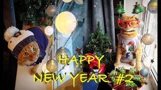 HAPPY NEW YEAR p2/ Funny animals, cats, raccoons, dogs ...