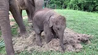 Samui Elephant Haven (Baby Haven with family 1)